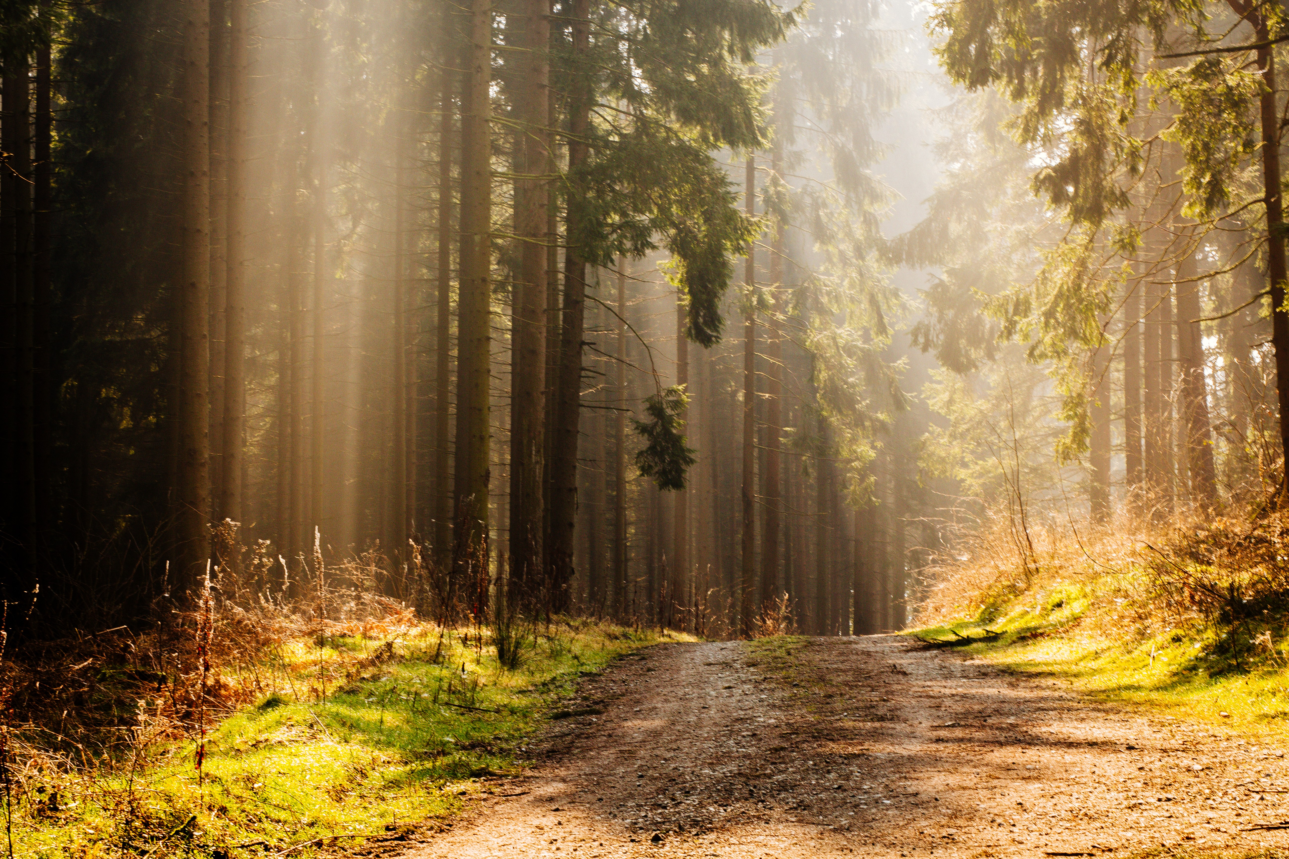 Sunbeam in the Forrest